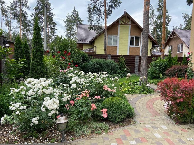 Английские Розы в саду на Фото