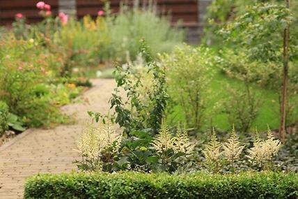 фото дизайна роз в саду