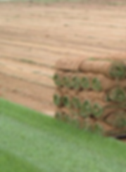 Фото укладки универсального рулонного красивого газона в Киеве. Купить рулонный газон получшей цене можно у компании Ваш Новый Сад