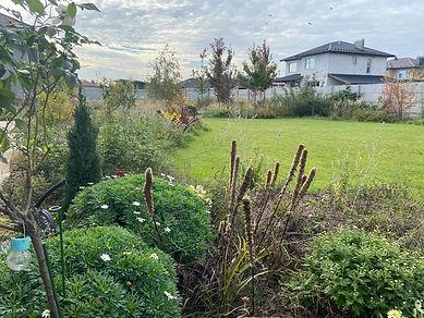 Газон в центре садового участка
