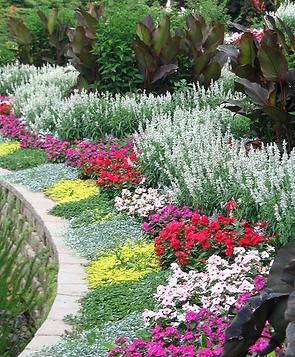 Фото осенней круглой уличной клумбы летом с красивыми невысокими растениями и яркими цветами. Это один из вариантов дизайна фигурной садовой клумбы с цветником. Купить проект такой весенней клумбы и ее устройство по лучшей стоимости можно у ландшафтной судии Ваш Новый Сад