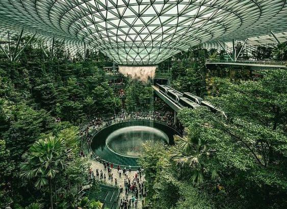 Крытый лес площадью 2,4 Га в аэропорту Сингапура