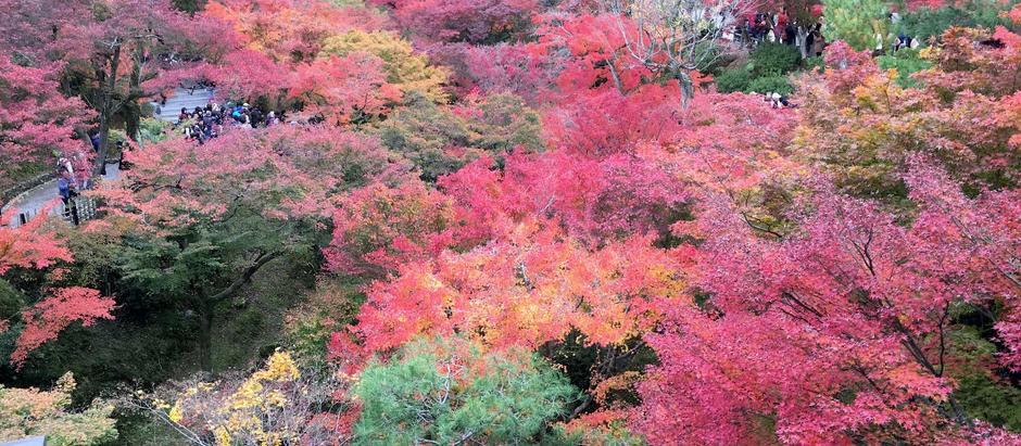 Посещение  парка Тофукудзи в программе нашего путешествия этой осенью