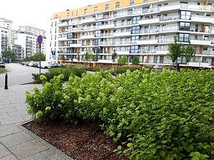 Городское озеленение 00007.jpg
