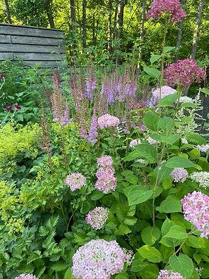 Декоративный цветник с красивыми растениями