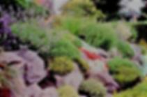 Альпийкая горка в камнях и многолетниках с травами