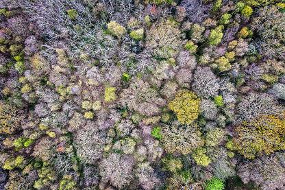 Woodland aerial view.jpeg