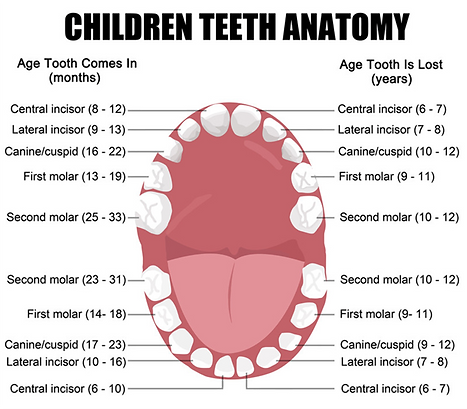 How many teeth kids have? Milton kids pediatric dentist