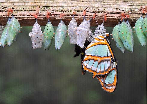 Schmetterling hashifit.de (1).png