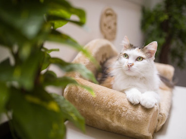 Das Katzencafe