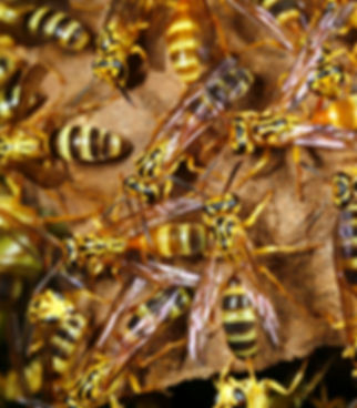 Schädlingsbekämpfung, Schädlinge bekämpfen, Insekten, Kammerjäger, Klagenfurt, Villach, Kärnten, Spittal, Wolfsberg, St. Veit, Hermagor