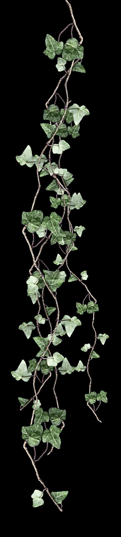 transparent-ivy-5df211f1ad27b9_edited_ed