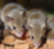 mouse pic.jpg