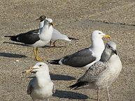 gull photo.jpg