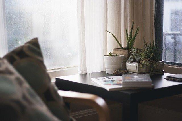 10 piante che purificano l'aria di casa