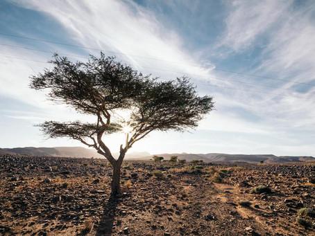 Hatóanyagok lépésről lépésre - avagy mi fán terem az argánolaj