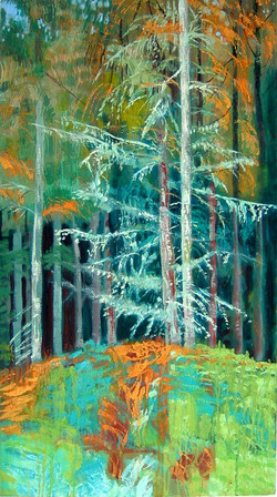 Ancient Larch Forest
