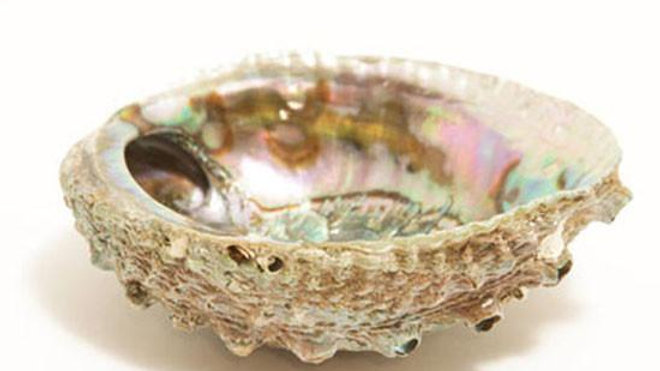 """Smudge Ash Tray and Burner - Abalone shell - Large 5""""-6.5"""""""