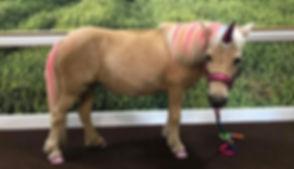 Pinky Pony.jpg