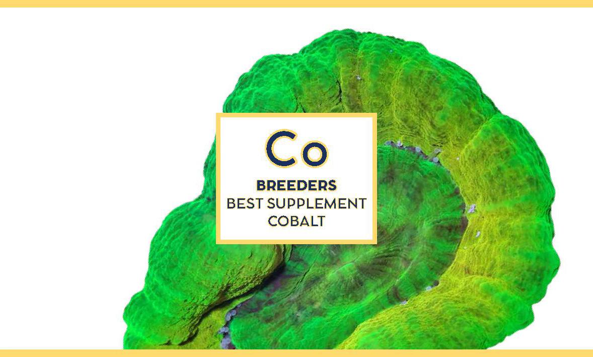 Swiss rainbow Reef Breeders Cobalt