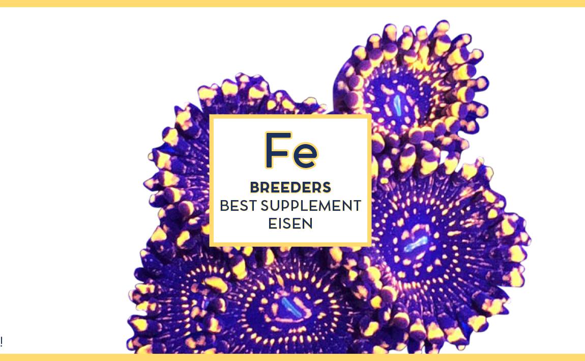 Swiss rainbow Reef Breeders Eisen