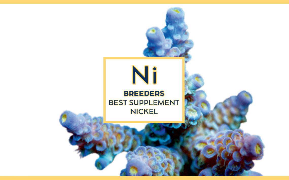 Swiss rainbow Reef Breeders Nikel