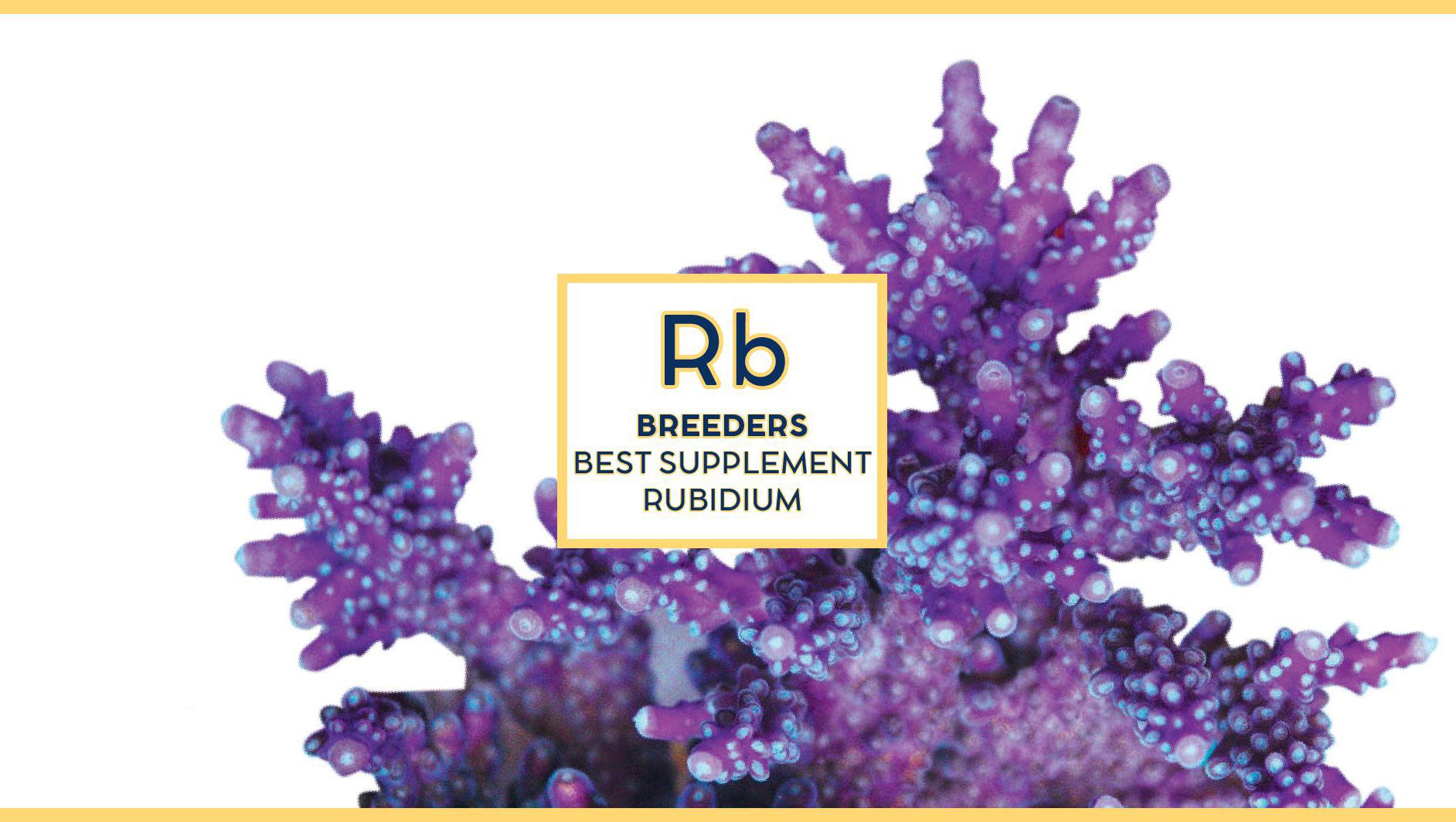 Swiss rainbow Reef Breeders Rubidium