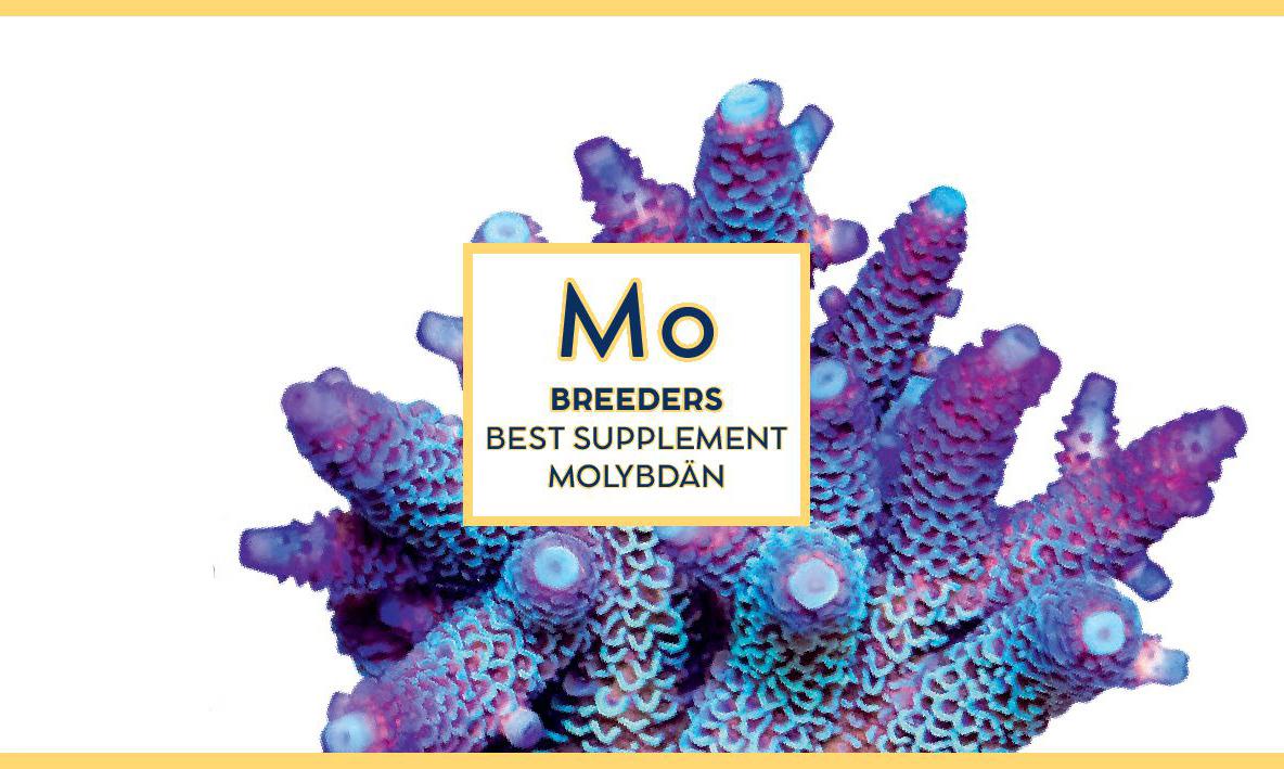 Swiss rainbow Reef Breeders Molybdan