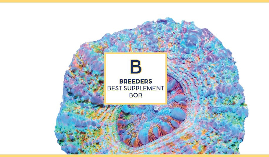 Swiss rainbow Reef Breeders Bor