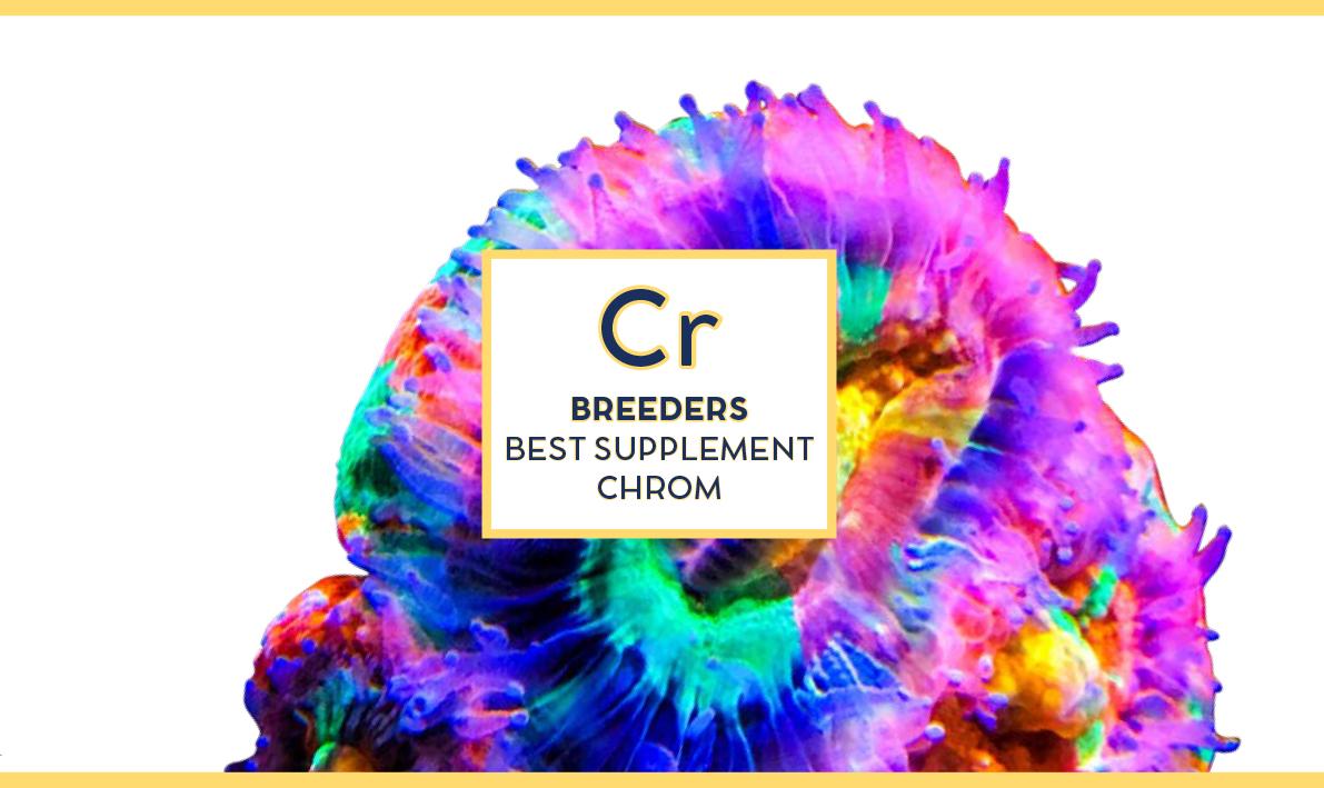 Swiss rainbow Reef Breeders Chrom