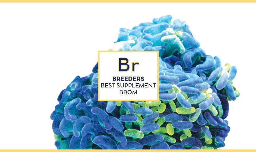 Swiss rainbow Reef Breeders Brom