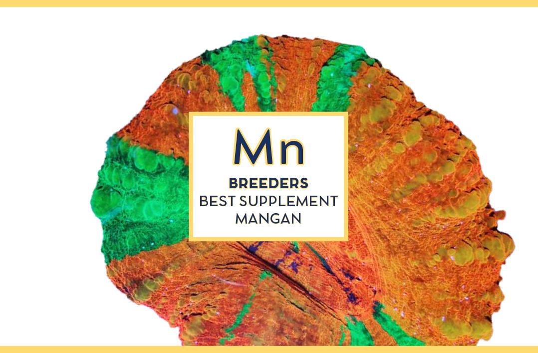Swiss rainbow Reef Breeders Mangan