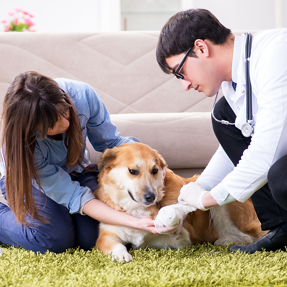 Get veterinary services at your doorstep