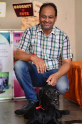 Black labrador at pupkitt pet care
