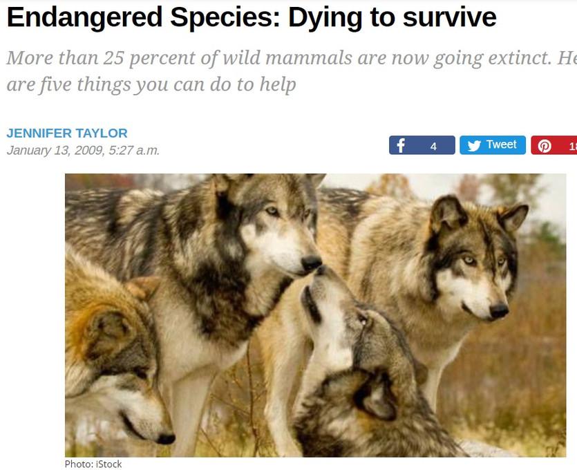 jennifer endangered.jpg