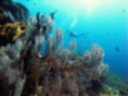 Deep Turbo Gili Trawangan Indonesia