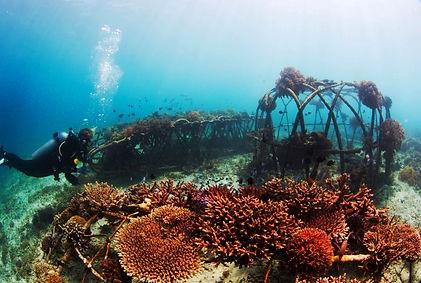 Biorock cage Gili Trawangan Indonesia