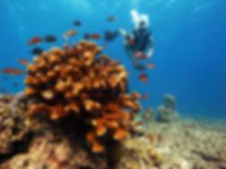 Mirkos Reef  Gili Trawangan Indonesia