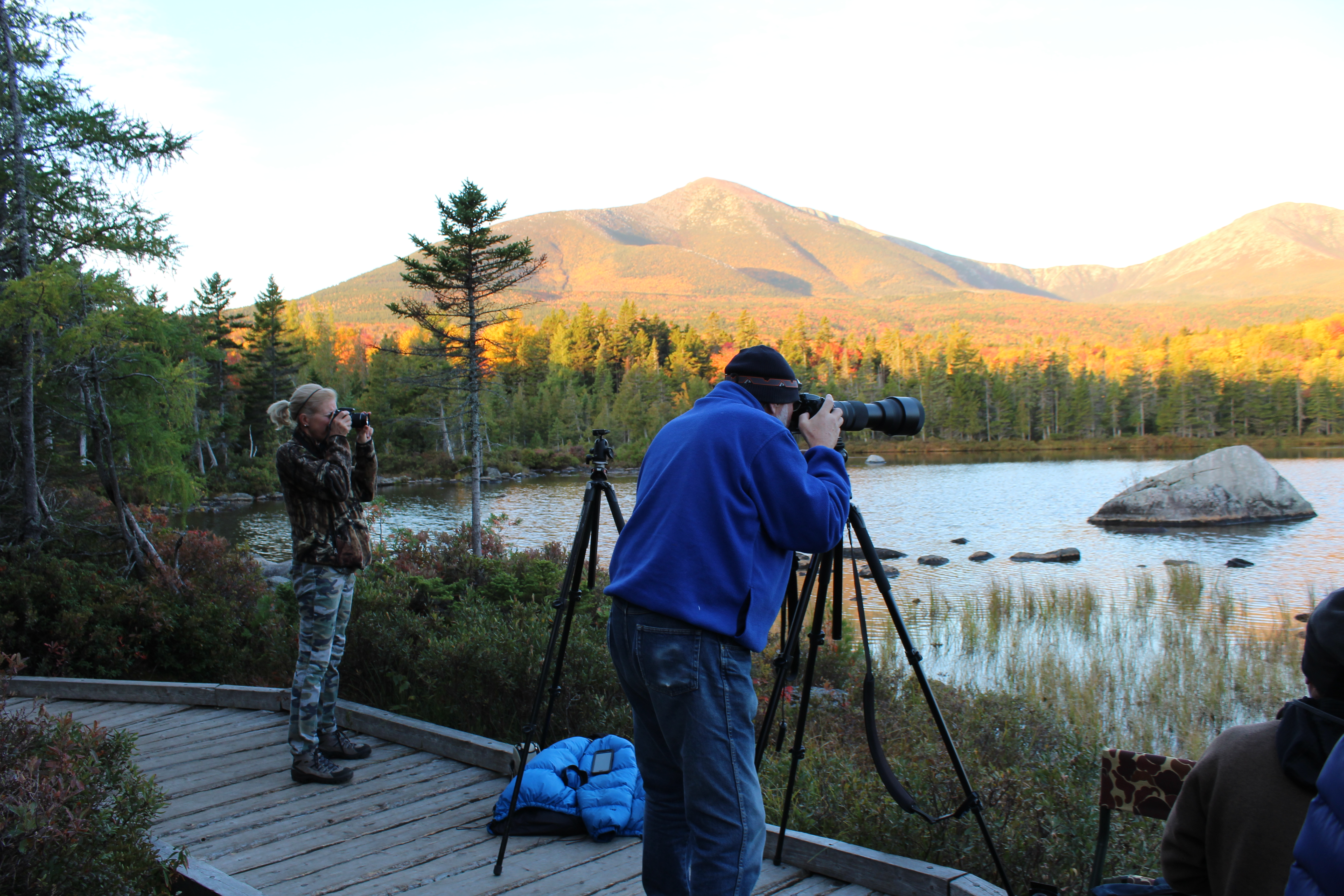 Moose Tours and Wildlife Photography