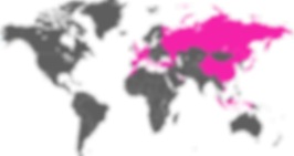 Mappa Pianeta Vettoriale.png