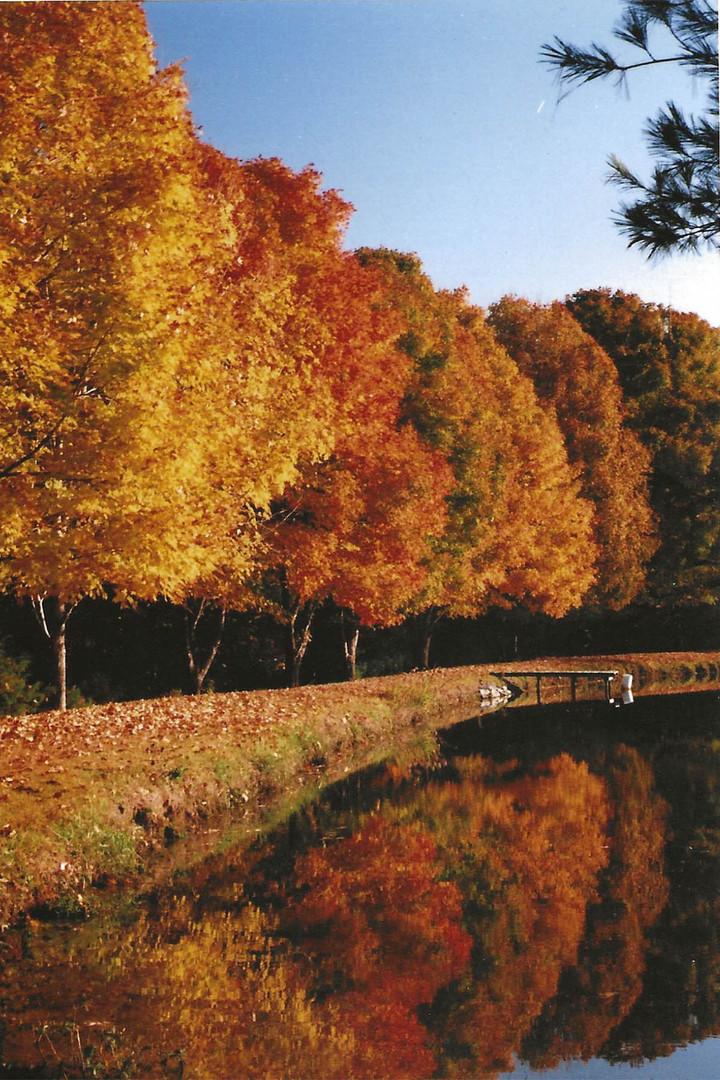 Fall 3.jpg