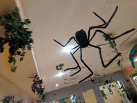 Giant Dancing Spider