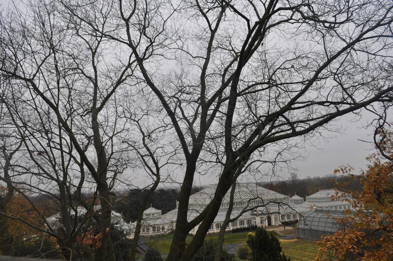 Kew Gardens - Year 6 Visit