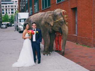 Sungeeta & Matt - The Elephant Wedding