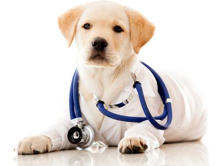 Marcapasso artificial para Pets já é realidade!!