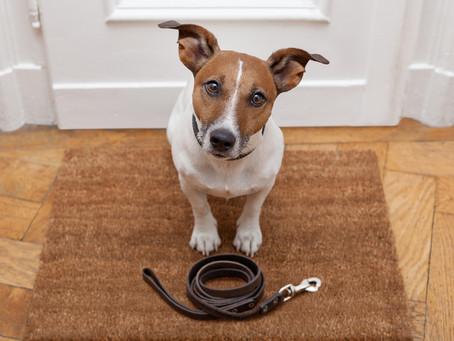 Sabia que a relação com os animais pode trazer benefícios para a saúde de seus tutores?