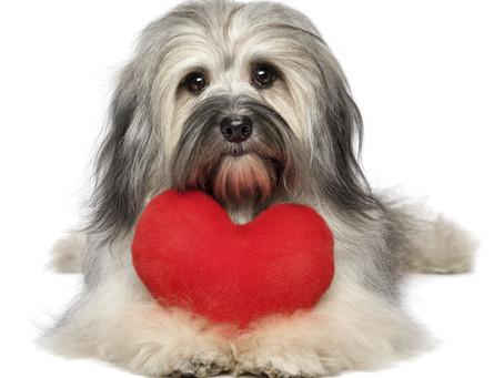 Você sabia que cão também pode ter problema cardíaco?