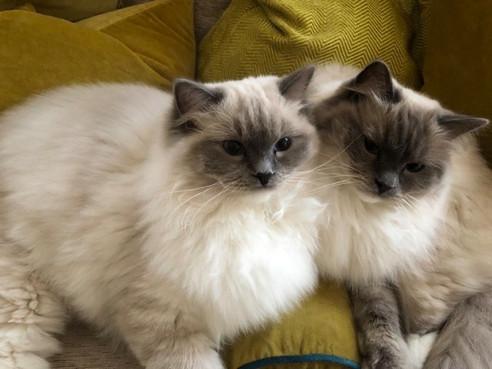 Maisie & Bella.jpg
