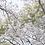 Thumbnail: SakuraPink for S-log2
