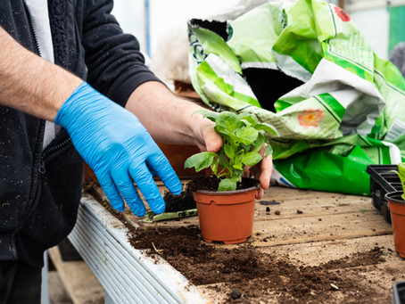 National Gardening Week 2020